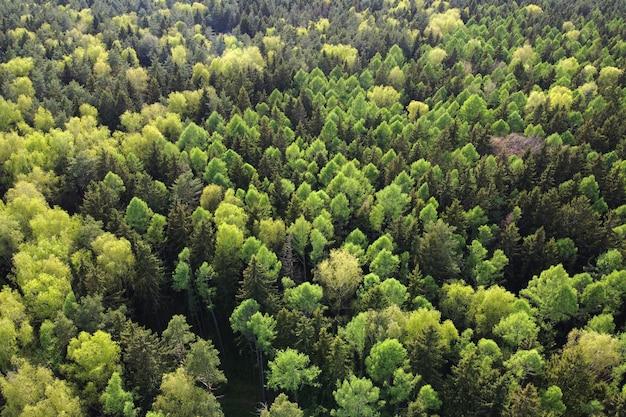 Vue aérienne du paysage forestier d'été avec la cime des arbres verts