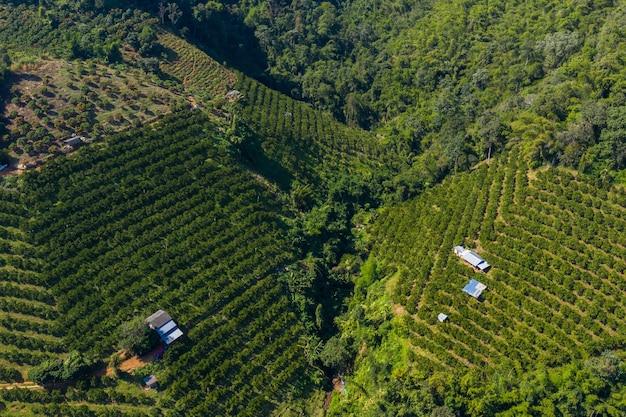 Vue aérienne du paysage des terres agricoles de mandarine agricole dans la vallée à chiangmai en thaïlande