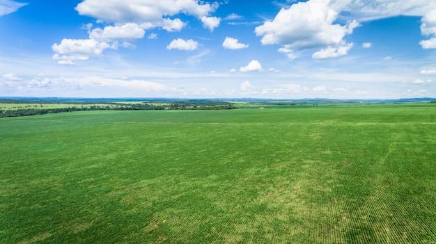 Vue aérienne d'une ferme avec des plantations de soja ou de haricots.