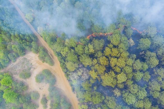 La vue aérienne avec le feu de forêt panoramique brûle les arbres fume la forêt d'herbe sèche de feu en californie usa