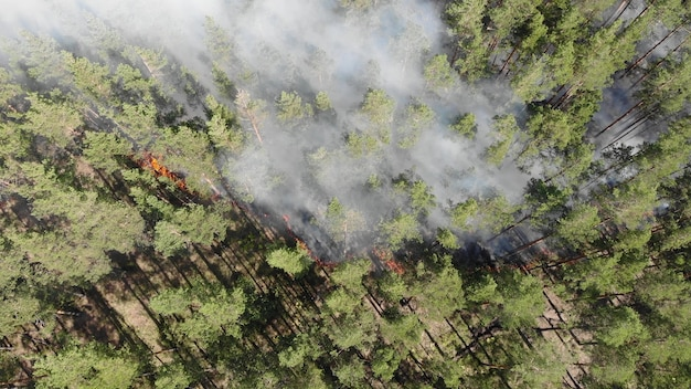 Vue aérienne les feux de forêt brûlent violemment.