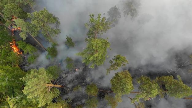Vue aérienne les feux de forêt brûlent violemment