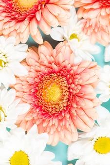 Une vue aérienne de fleurs roses et blanches
