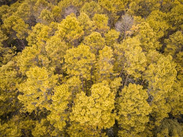 Vue aérienne forêt arbre environnement forêt nature fond, texture d'oranger jaune et arbre mort vue de dessus forêt d'en haut paysage oiseau vue forêt de pins automne orange rush