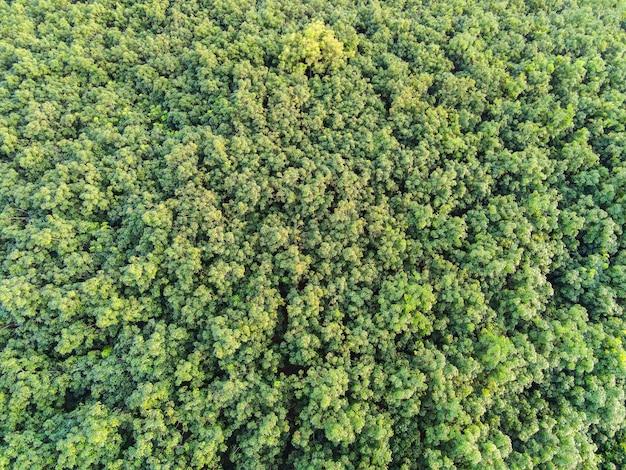 Vue aérienne forêt arbre environnement forêt nature fond, texture de vue de dessus d'arbre vert