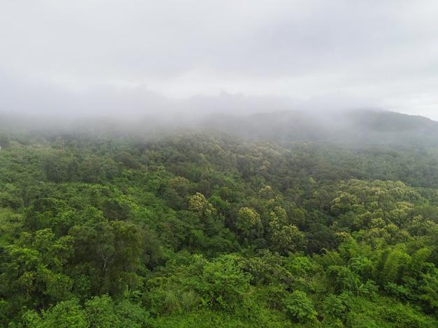 Vue aérienne forêt arbre environnement nature fond, brume sur la forêt verte vue de dessus paysage brumeux la colline d'en haut, pin et forêt fond de montagne