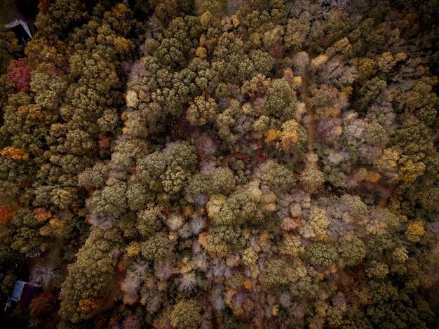 Vue aérienne d'une forêt avec des arbres de différentes couleurs