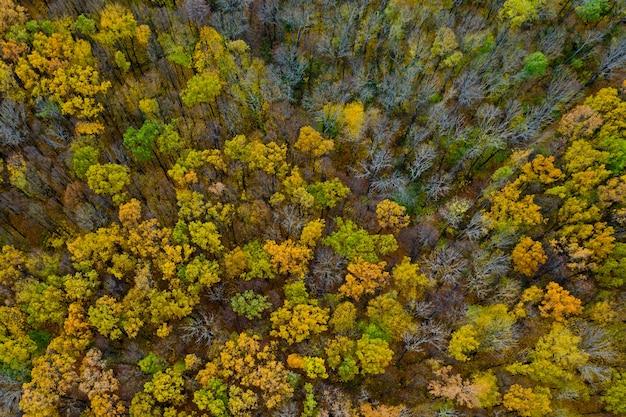 Vue aérienne de la forêt d'automne.