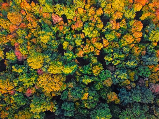 Vue aérienne de la forêt d'automne