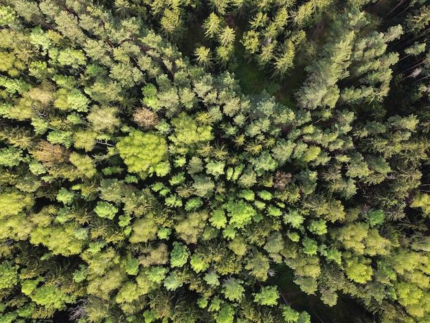 Vue aérienne de la forêt. cimes des arbres verts. vue aérienne du paysage forestier d'été