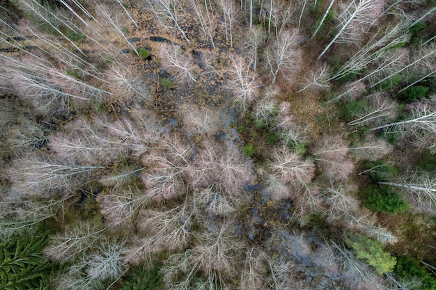 Vue aérienne d'une forêt dense avec des arbres d'hiver nus et des feuilles mortes sur un terrain