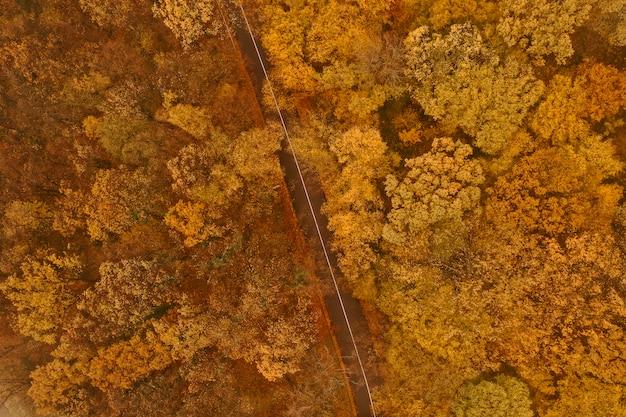 Vue aérienne de la forêt épaisse en automne avec une route qui traverse