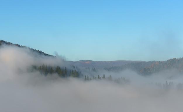 Vue aérienne de la forêt de pins brumeux sur les montagnes des carpates
