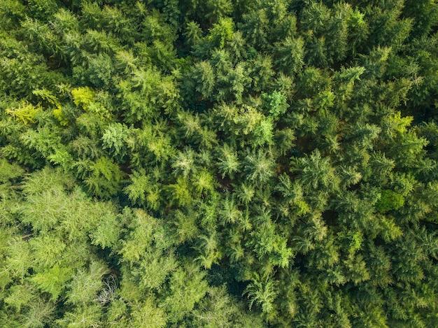 Vue aérienne d'une forêt