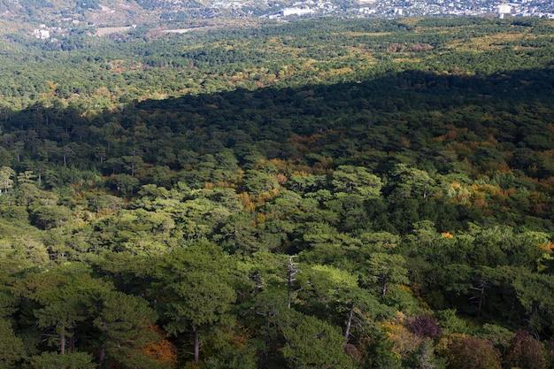 Vue aérienne de la forêt