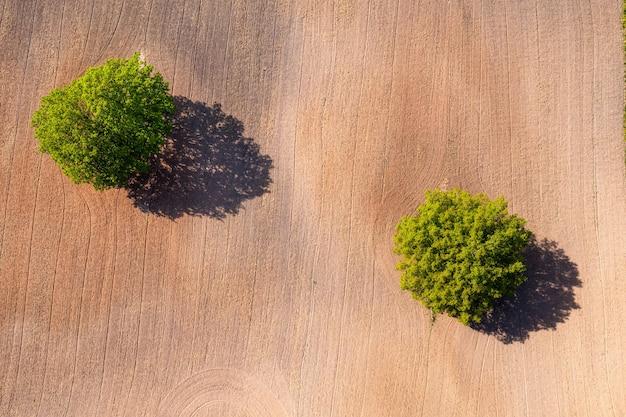 Vue aérienne de haut en bas sur deux arbres au milieu d'un champ cultivé, champ avec chenilles de tracteur, espace de copie