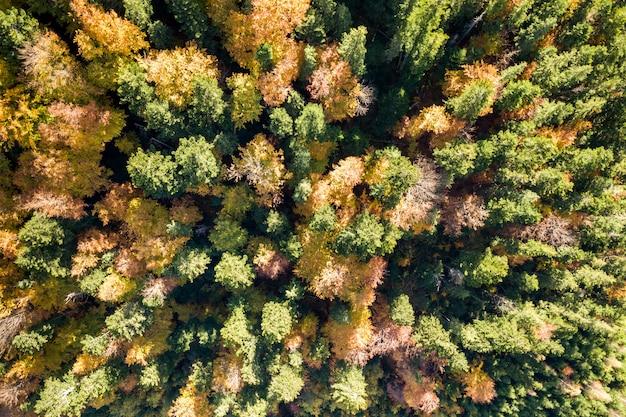 Vue aérienne de haut en bas de la forêt d'automne verte et jaune avec de nombreux arbres frais.