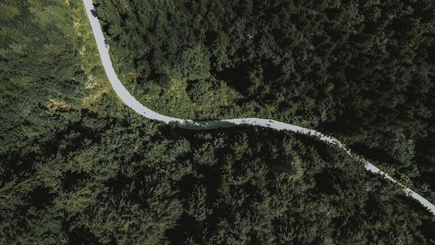 Vue aérienne d'une longue route menant à travers des arbres verts denses