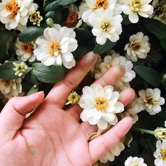 Vue aérienne, de, main, toucher, blanc, fleurs