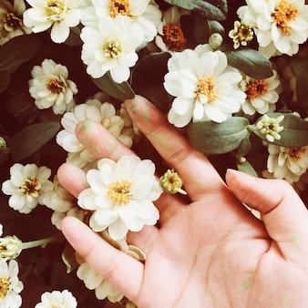 Vue aérienne, de, main, toucher, fleurs blanches