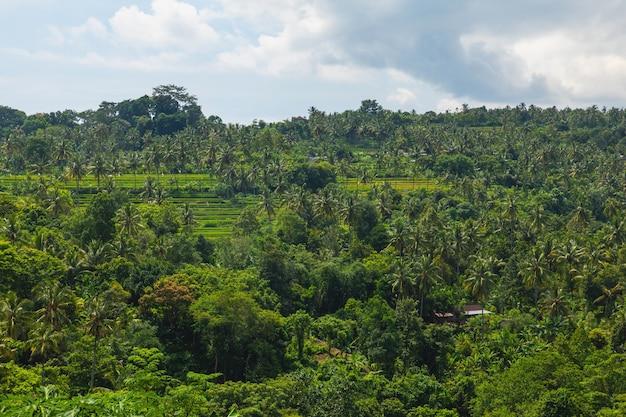 Vue aérienne des palmiers et des rizières en terrasses