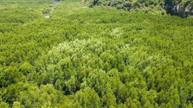 Vue aérienne de paysage d'arbre ou de forêt, krabi en thaïlande