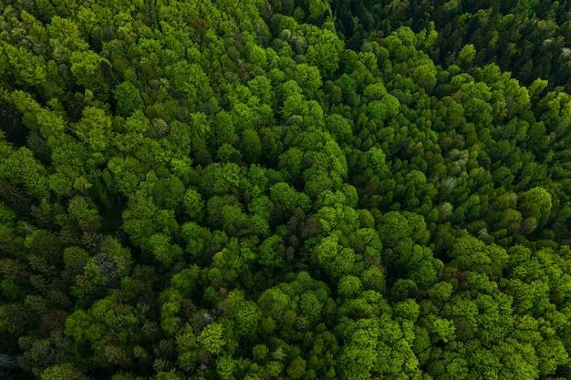 Vue aérienne de pins mixtes sombres et d'une forêt luxuriante avec des auvents d'arbres verts.