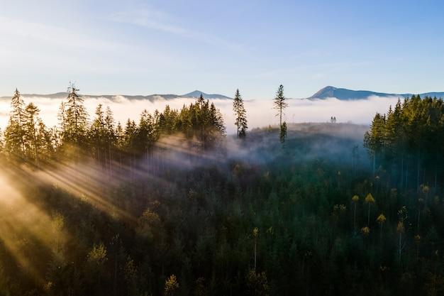 Vue aérienne de pins vert foncé dans la forêt d'épinettes avec des rayons du lever du soleil qui brillent à travers les branches dans les montagnes d'automne brumeuses.