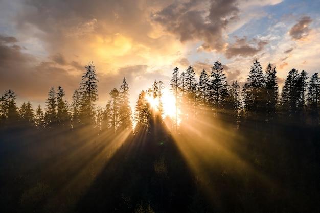 Vue aérienne de pins vert foncé dans une forêt d'épinettes avec des rayons du lever du soleil qui brillent à travers les branches