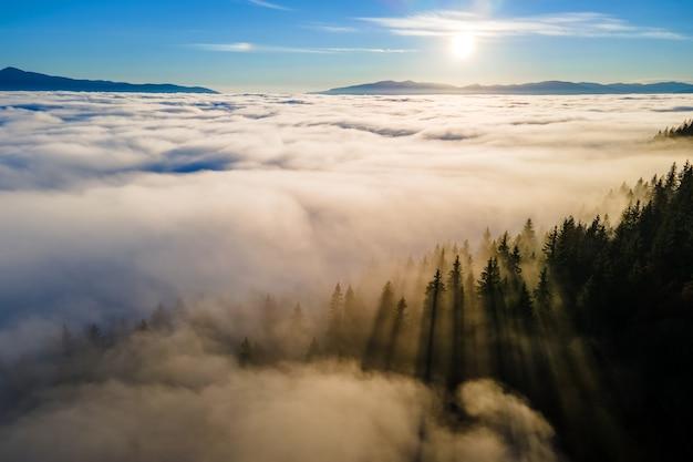 Vue aérienne de pins vert foncé dans une forêt d'épinettes avec des rayons de lever de soleil qui brillent à travers les branches dans les montagnes d'automne brumeuses.