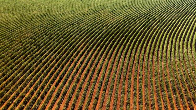 Vue aérienne de la plantation de café dans l'état de minas gerais - brésil