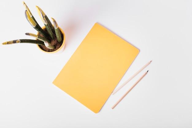 Vue aérienne, de, plante d'intérieur, à, papier vierge, et, deux, crayons, sur, arrière-plan blanc