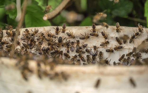 Vue aérienne de plusieurs abeilles sur la ruche