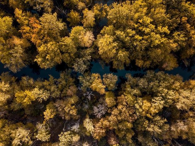 Vue aérienne d'une rivière au milieu d'arbres à feuilles brunes et jaunes