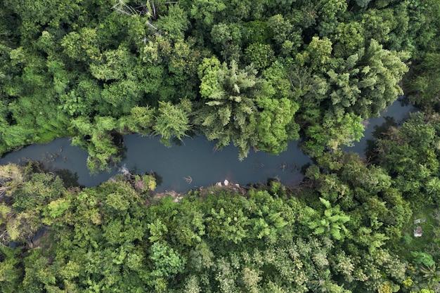 Vue aérienne de la rivière dans la forêt tropicale abondante sur le parc naturel à la campagne
