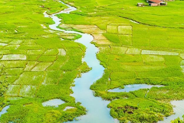 Vue aérienne d'une rizière et d'une rivière qui la traverse. stock photo de paysage