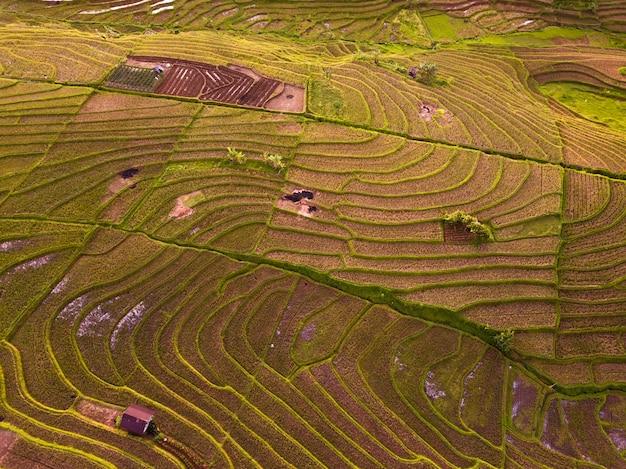 Vue aérienne des rizières en terrasses en indonésie