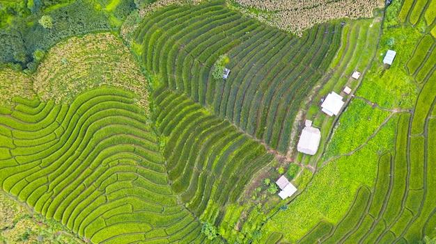 Vue aérienne des rizières en terrasses vertes paysage modèle différent au matin dans le nord de la thaïlande