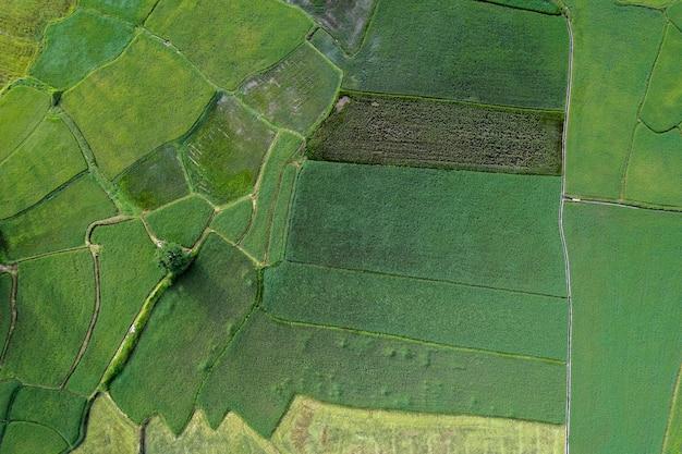 Vue aérienne de rizières vertes dans la campagne thaïlandaise.