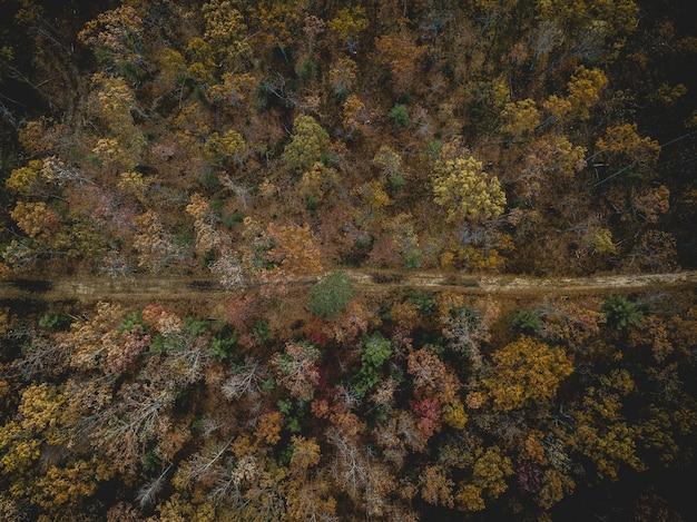 Vue aérienne d'une route au milieu d'une forêt avec des arbres à feuilles jaunes et vertes