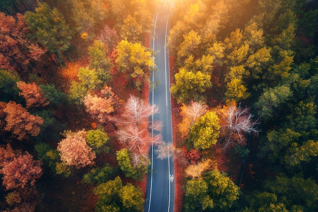 Vue aérienne de la route dans la belle forêt d'automne