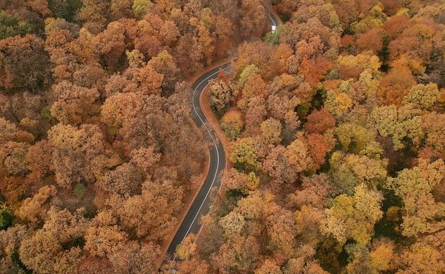 Vue aérienne sur la route dans la belle forêt d'automne