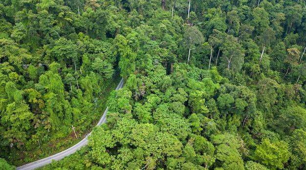 Vue aérienne de la route à travers la forêt