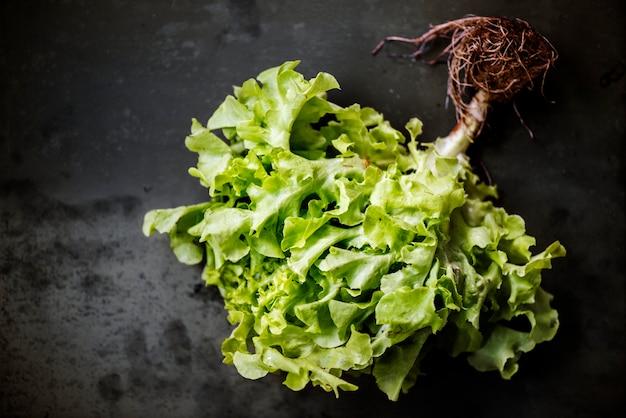 Vue aérienne de salade de chêne vert frais sur fond noir