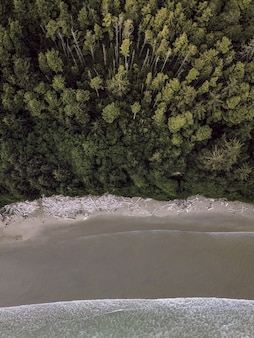 Vue aérienne verticale d'une forêt près d'un littoral