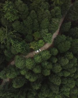 Vue aérienne verticale d'une voiture à cheval sur une route dans la forêt avec de grands arbres denses verts