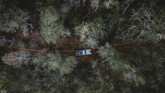 Vue aérienne d'une voiture roulant dans une forêt entourée de grands arbres