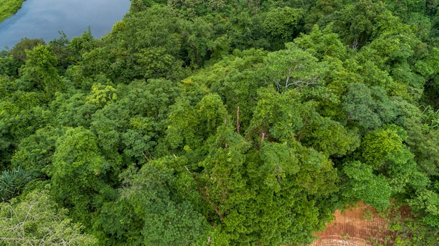 Vue aérienne vue de dessus de la forêt tropicale