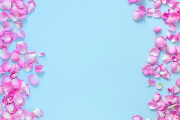 Vue d'angle élevé de pétales de roses roses sur fond bleu