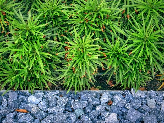 Vue d'angle élevé de petits buissons verts par le sol en pierre